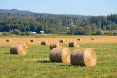 在农村华盛顿州的大圆的干草捆 免版税库存照片