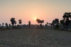 在农村场面的桄榔树在日落时间,泰国 免版税库存图片