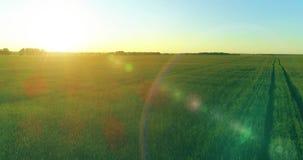 在农村夏天领域上的低空飞行与不尽的黄色风景夏天晴朗的晚上 在天际的太阳光芒 影视素材