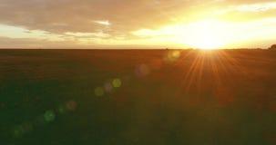 在农村夏天风景上的飞行与不尽的黄色领域晴朗的夏天晚上 农业农田秋天 影视素材