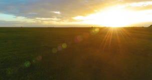 在农村夏天风景上的飞行与不尽的黄色领域晴朗的夏天晚上 农业农田秋天 股票视频