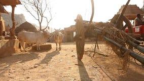 在农村家庭的印度的公牛推车 股票录像