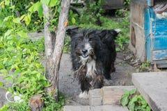 在农村狗屋附近的狗 免版税库存照片