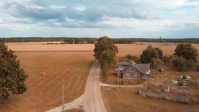 在农村路的飞行在往农舍和谷仓的成熟麦田中 股票录像
