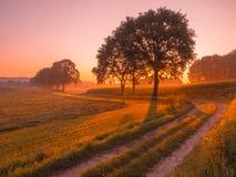 在农村风景的橙色和桃红色日出在奈梅亨附近 免版税图库摄影