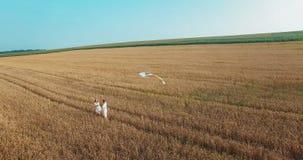 在农村麦田的年轻愉快的夫妇 影视素材