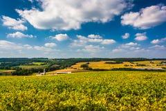 在农田和绵延山的美丽的天空在农村约克C 库存图片