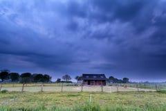 在农田的小马在风雨如磐的早晨 免版税库存照片