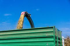 在农田的玉米收获在斯洛文尼亚 青贮是抽的direc 免版税库存图片