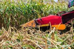 在农田的玉米收获 免版税库存照片