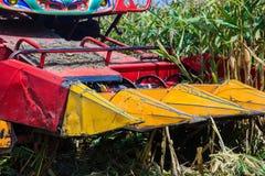 在农田的玉米收获 图库摄影