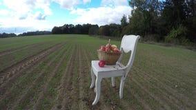 在农田的白色古色古香的木椅子秋天和充分的苹果篮子 Timelapse 4K 影视素材