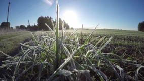 在农田草的第一白色霜在秋天 Timelapse 4K 股票视频