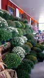 在农舍前沿的五颜六色的花 免版税图库摄影