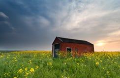 在农舍后的日落在油菜籽领域 库存图片