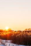 在农舍和芦苇的日落在湖 免版税图库摄影