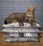 在冠的猫在枕头2说谎 库存图片