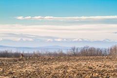 在冬天下午的被犁的领域 免版税库存图片