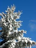在冬天之下的冷杉雪 免版税库存照片