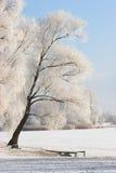 在冬天之下的河场面 免版税库存照片