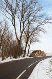 在冬天储备沿路的端的被锯的结构树 免版税库存图片