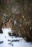 在冬天公园各种各样的鸟饲养者在灌木垂悬 免版税库存图片