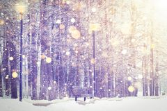 在冬天公园背景的光亮的雪花 圣诞节和新年题材 在五颜六色的日落的冬天降雪 免版税库存照片