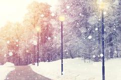 在冬天公园背景的雪花 明亮的冬天日落 降雪在公园 美好的圣诞节题材 免版税库存照片