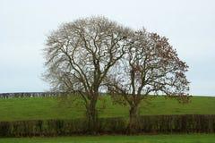 在冬天剪影的树在农厂树篱在北爱尔兰 库存照片