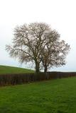 在冬天剪影的树在农厂树篱在北爱尔兰 免版税图库摄影
