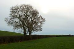 在冬天剪影的树在农厂树篱在北爱尔兰 库存图片