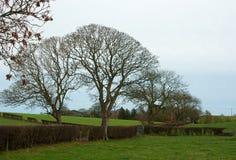 在冬天剪影的树在农厂树篱在北爱尔兰 免版税库存照片