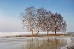 在冬天和春天之间 库存照片