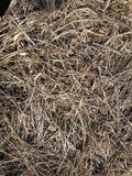 在冬天土地的干草 库存图片