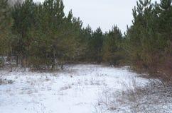 在冬天在森林里 免版税库存照片