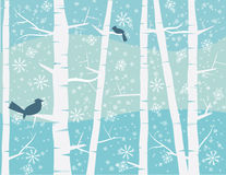 在冬天场面的鸟 库存照片