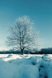 在冬天域和蓝天的冻结结构树 免版税库存图片
