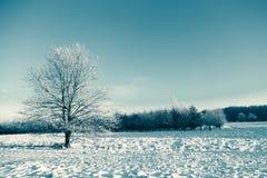 在冬天域和蓝天的冻结结构树 库存照片