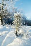 在冬天域和蓝天的冻结结构树 免版税库存照片