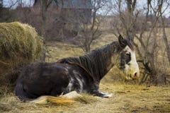 在冬天外套的老马由一个大包干草 图库摄影