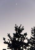 在冬天天空和月亮寒冷的结构树剪影 库存照片