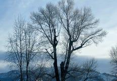 在冬天天空的光秃的树枝 库存图片