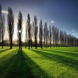 在冬天太阳的公园树 图库摄影