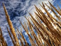在冬天太阳的草 免版税图库摄影