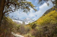 在冬天季节的五颜六色的森林和雪山在siguniang风景区 免版税库存照片