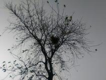 在冬天季节的树 库存照片
