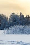 在冬天季节的湖岸与在霜,日落的芦苇 免版税库存照片