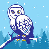 在冬天季节的猫头鹰 免版税库存图片
