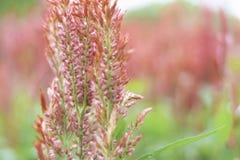 在冬天季节的红色花 库存图片
