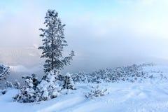 在冬天山的杉木 免版税库存照片